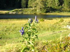 Seewaldsee2